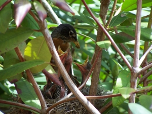 Lessons from A Robin's Nest