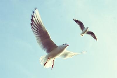 Birds arise U